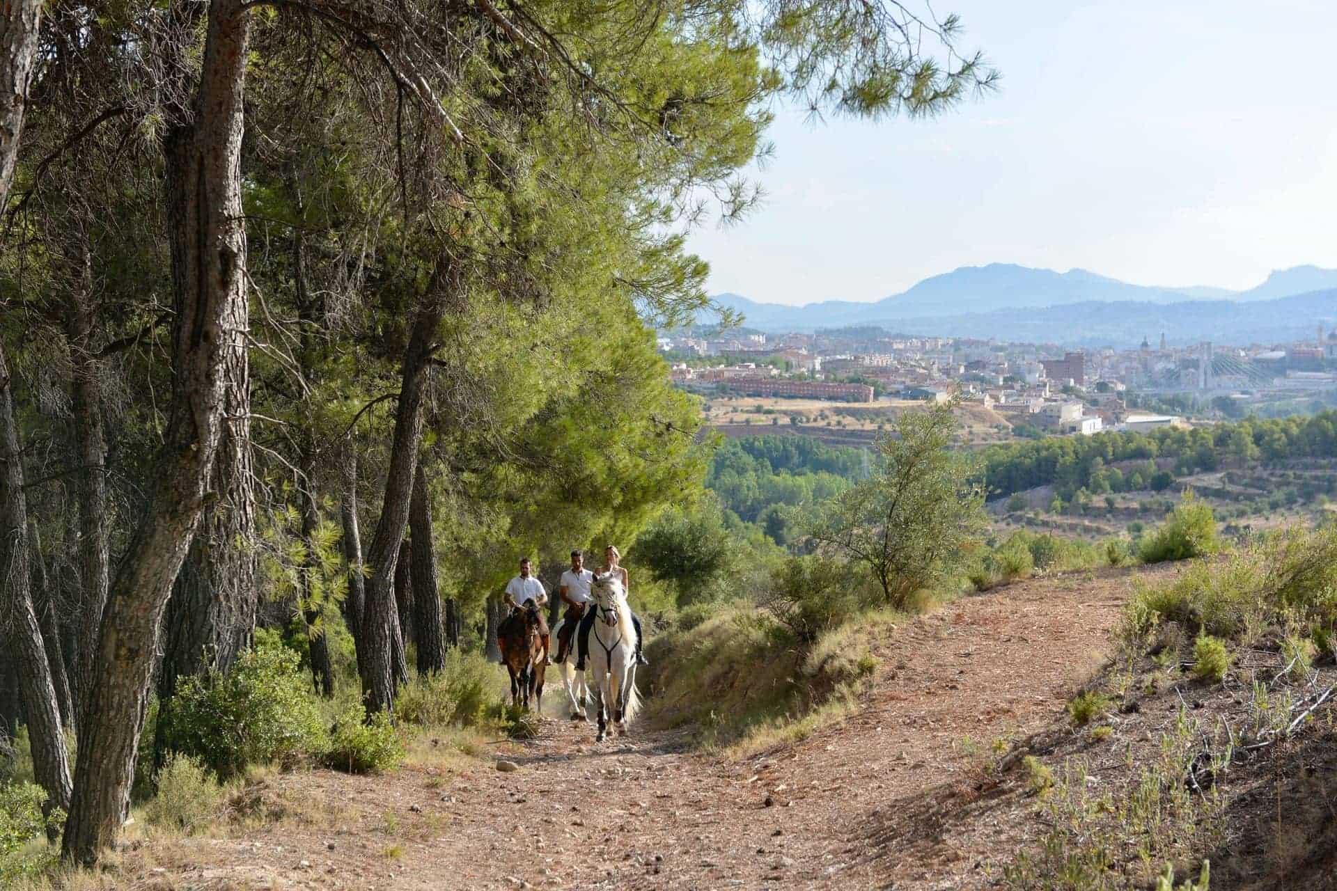 Paseos a caballo Alicante Interior_DSC0182