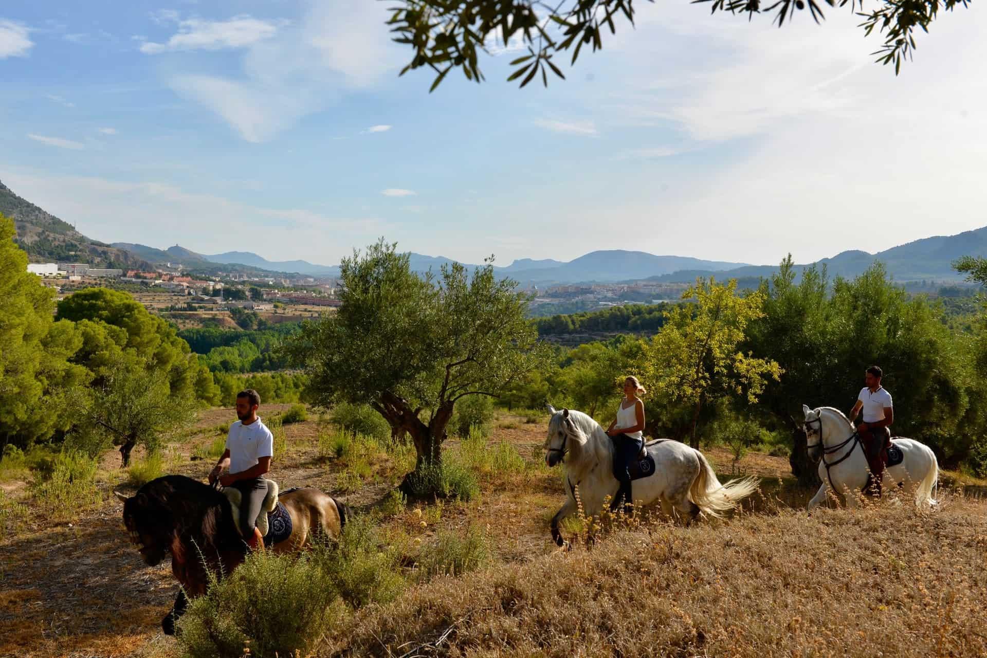 Paseos a caballo Alicante Interior_DSC0210