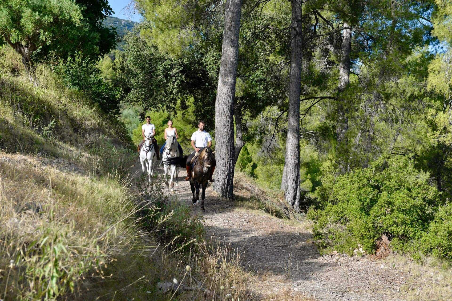 Paseos a caballo Alicante Interior_DSC0238